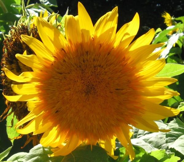 高嶺の花の超美系がぽっちゃり系と付き合う7つの意味